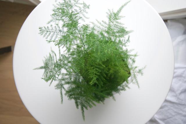 viherkasvi