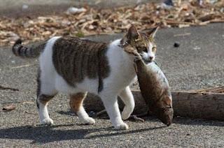 Kucing Kampung Mencuri