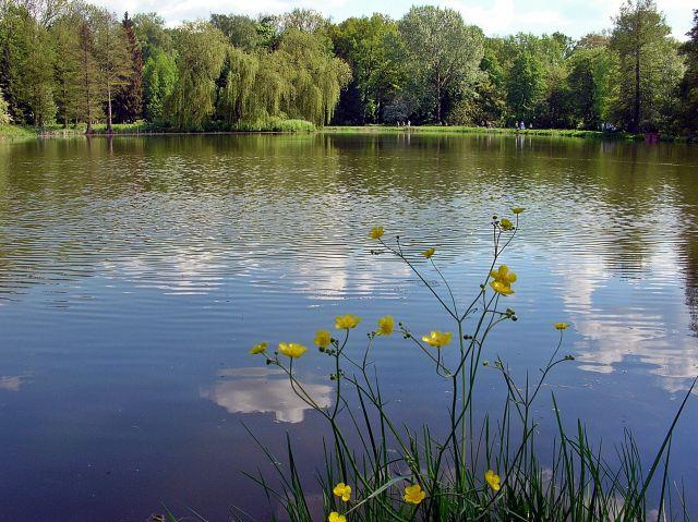 woda, kwiaty, drzewa, Kórnik