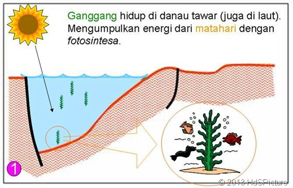 Gambar Proses Pembentukan Minyak Bumi Pertama Kali