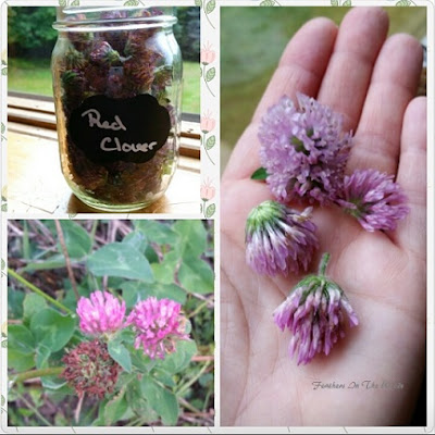 uses for red clover