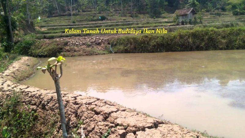 Gambar Kekurangan Kolam Tanah Untuk Budidaya Ikan Nila
