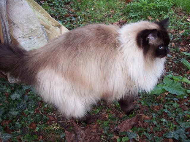 The Best Online Pets Info
