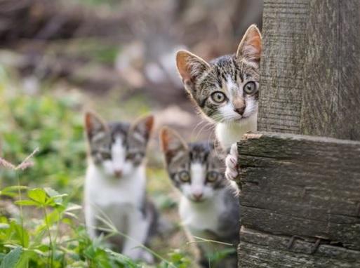 Emejing Cara Menguburkan Kucing Secara Islam Photos - ansomone.us ...