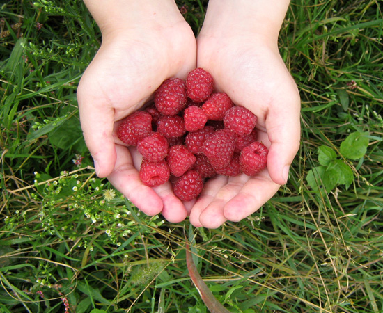 ягоды, berries