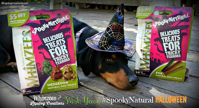 doberman puppy witch hat halloween dog treats