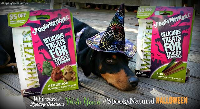 doberman puppy witch hat halloween dog treats