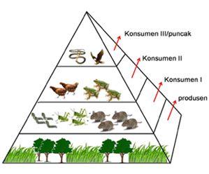 Pengertian, Contoh dan Gambar Piramida Makanan serta Jaring-jaring Kehidupan