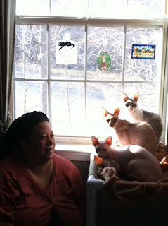BlogPaws friend, Carol, and her three cats