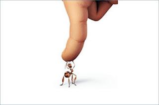 A Formiga e a hierarquia