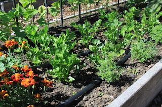 celery and artichoke