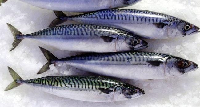Một số loại cá phụ nữ mang thai không nên ăn