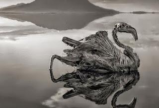 Η λίμνη του θανάτου, που ότι την ακουμπάει του «ρουφάει» τη ζωή – Δείτε συγκλονιστικές εικόνες που κόβουν την ανάσα