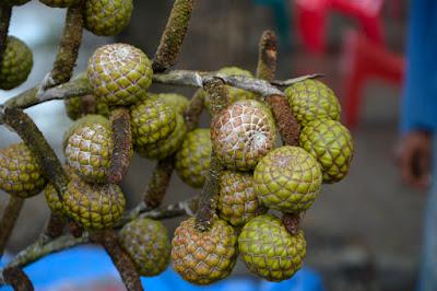 sago palm fruit