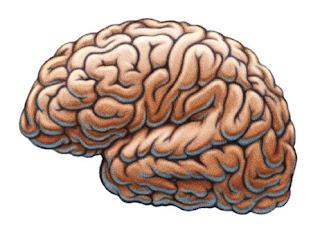 Makanan yang Baik untuk Kecerdasan Otak anda