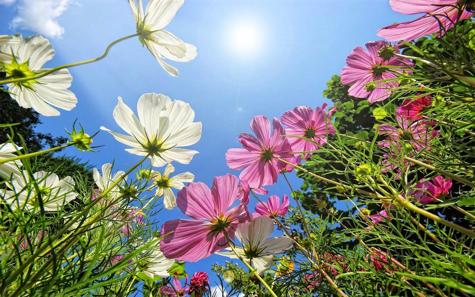 Foto bloemen blauwe lucht zon zomer