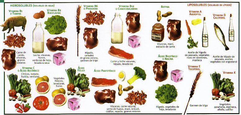 Vitaminas, Tipos e Funções das Vitaminas