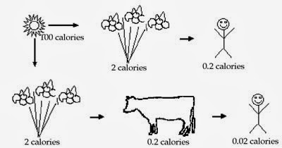 142 Food chain and energy efficiency | Biology Notes for