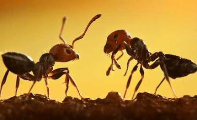 Kisah Inpirasi Dua Semut Penggali Semangat