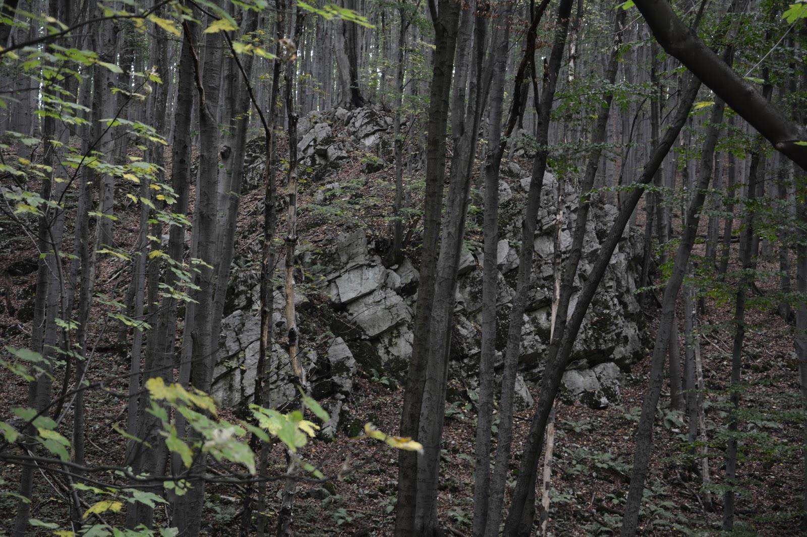 Dolinki Krakowskie – Rezerwat Doliny Racławki – żołta ścieżka dydaktyczna