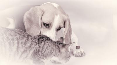 Tierporträt, Katze mit Hund im Studio von Fotograf Michael Schalansky