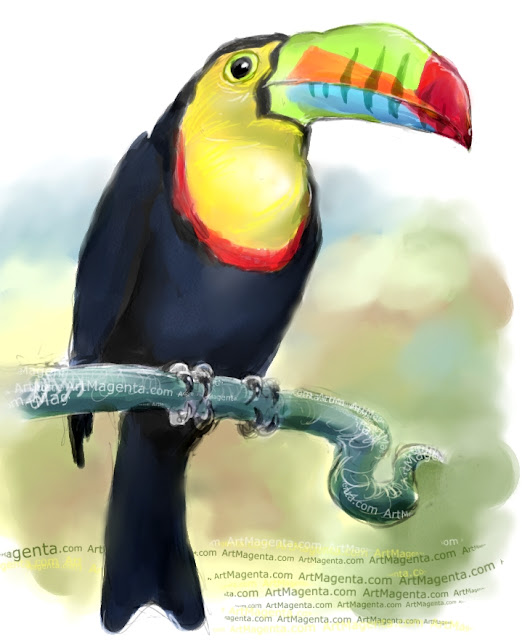 Keel-billed toucan  sketch painting. Bird art drawing by illustrator Artmagenta