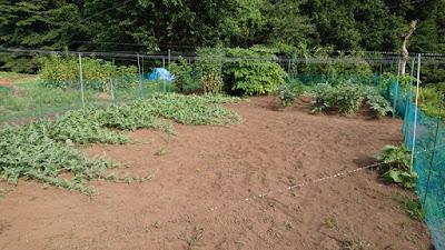 除草終了。さっぱりしました。黒土が乾燥で灰色の火山灰みたいになっています。