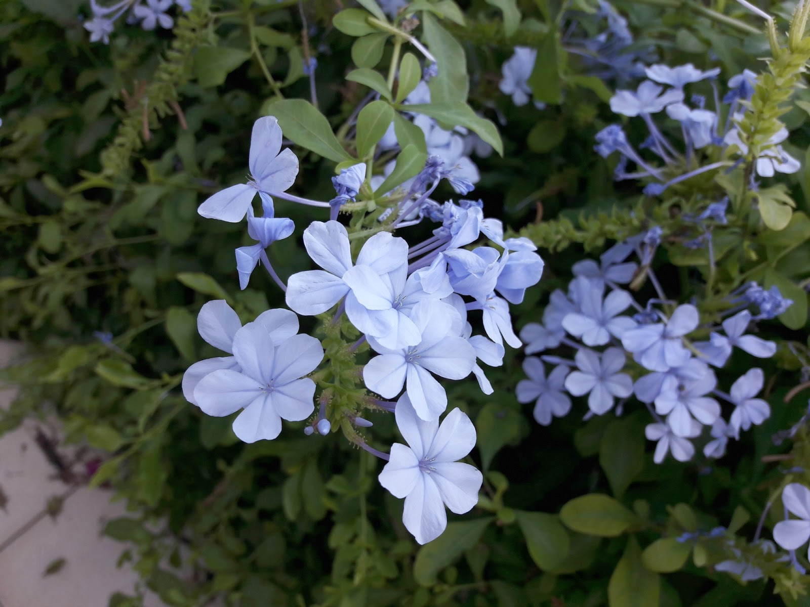 Winwick mum home again its a bit sad really and i speak as one whos not always very good at remembering to water houseplants i dont know what the blue flowers are izmirmasajfo