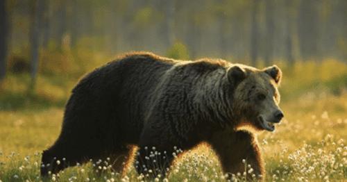 Angka Mimpi Beruang Togel Terlengkap DewiTogel