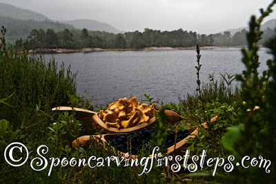 glen-affric.foraging-for-chanterelle