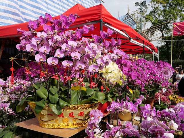 flowers for sale at the Fa Hui Lunar New Year Fair