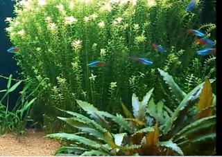 Unduh 54 Koleksi Background Awan Aquascape Gratis Terbaru