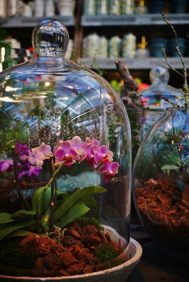 campana de cristal con orquídeas