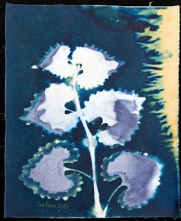 Wet cyanotype_Sue Reno_Image 592