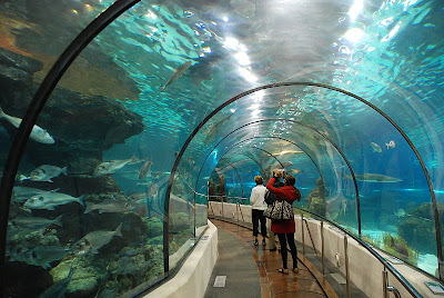 Aquarium of Barcelona