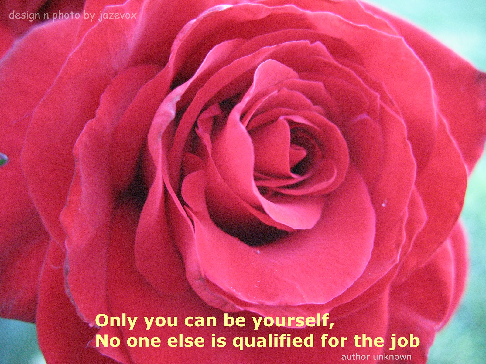 Knumathise Red Roses Tumblr Quotes Images
