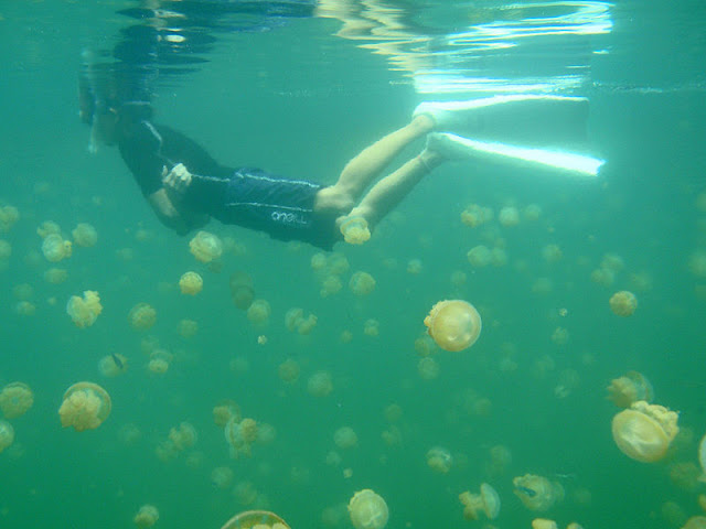 Swimming in the jellyfish lake