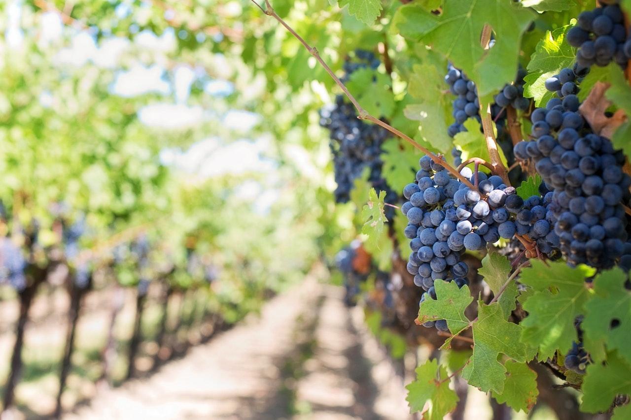 Axel Preuss-Kuhne | Blogspot: La industria vinícola en La Florida ...