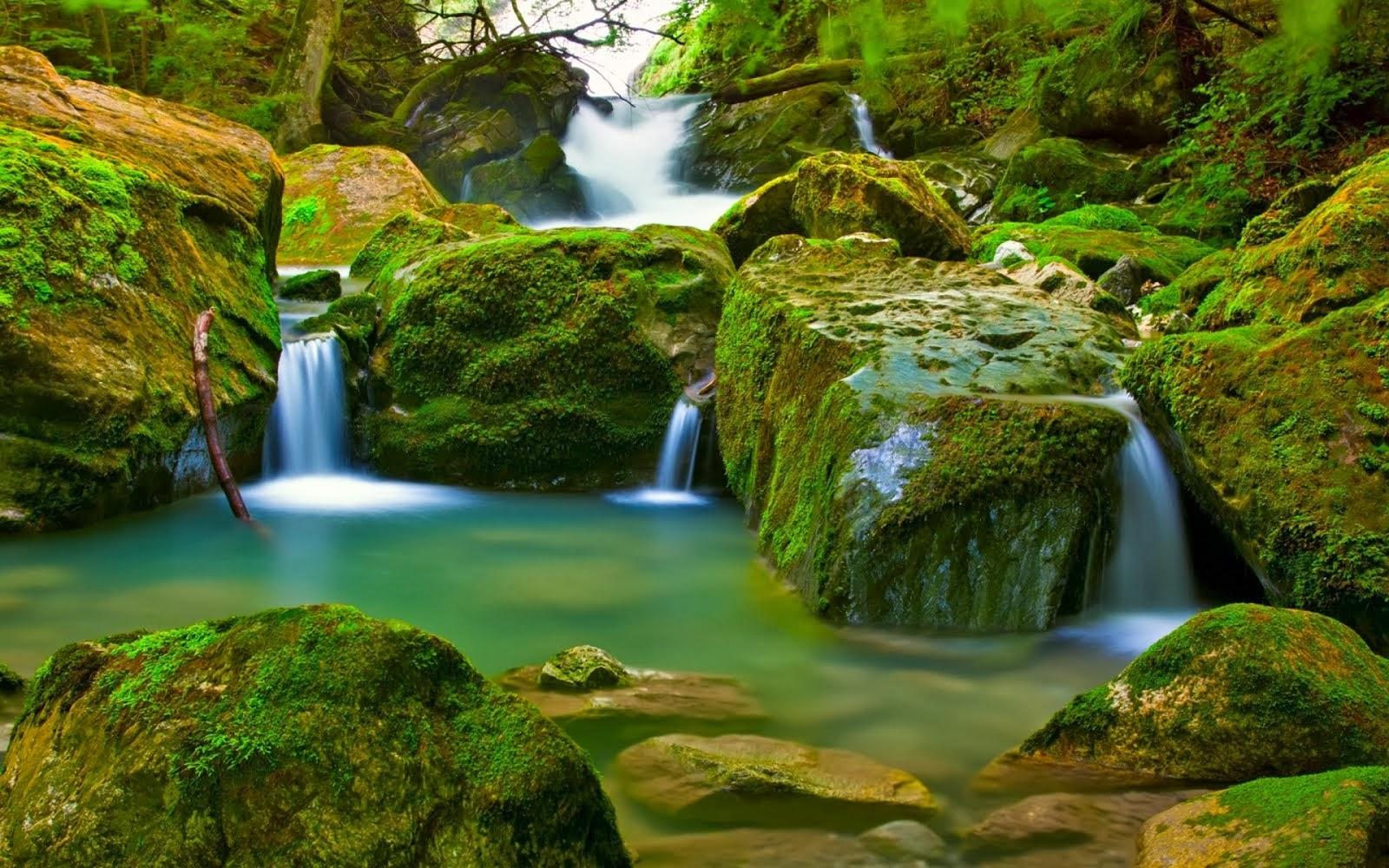 Fondos De Pantalla O Wallpapers Naturaleza Flores La: Wallpapers HD: Wallpapers De Paisajes Y Naturaleza En HD (22