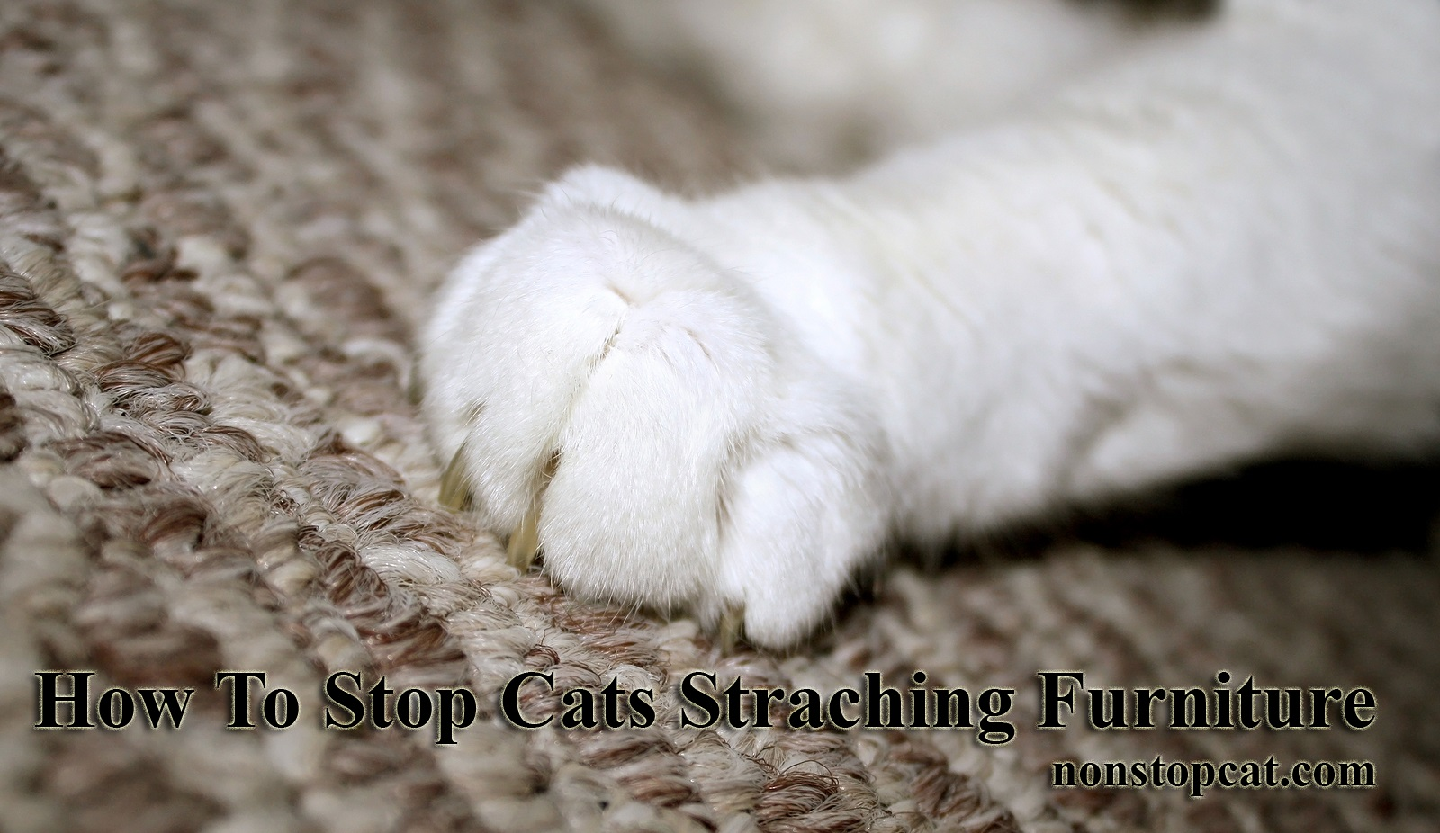 How To Stop Cats Straching Furniture