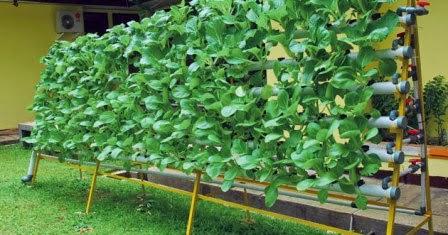 Budidaya tanaman hidroponik bertingkat