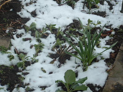 Close up of a garden bed with plants poking out of the snow