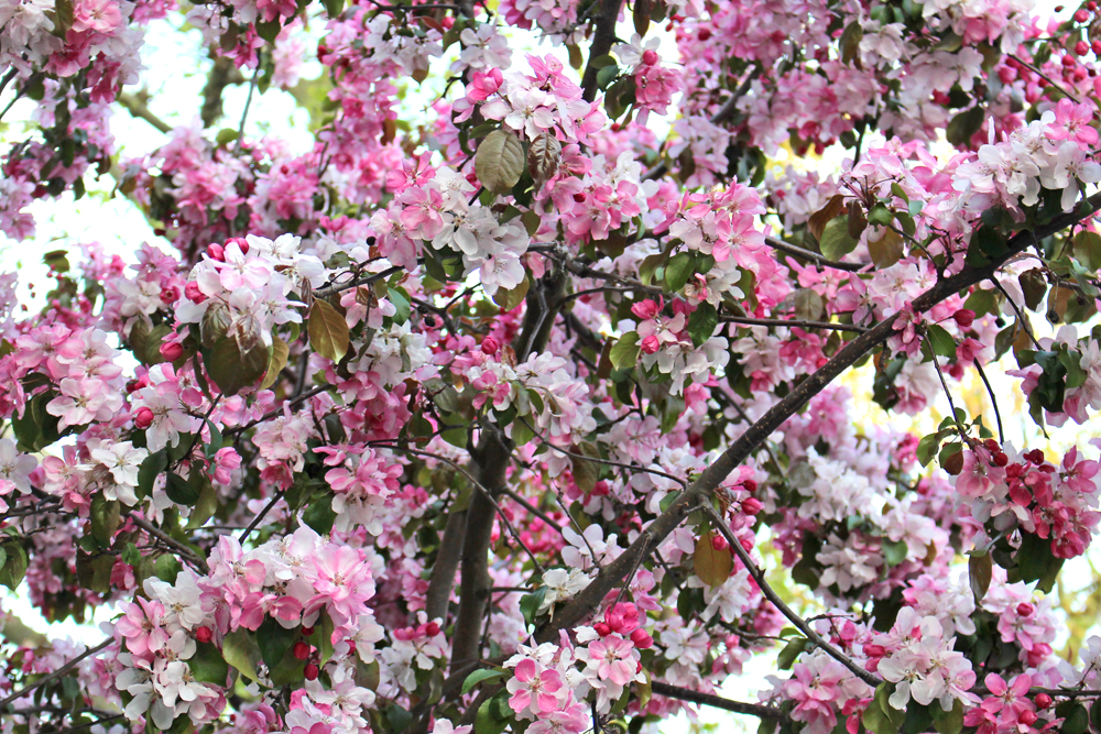London spring trees - UK lifestyle blogger