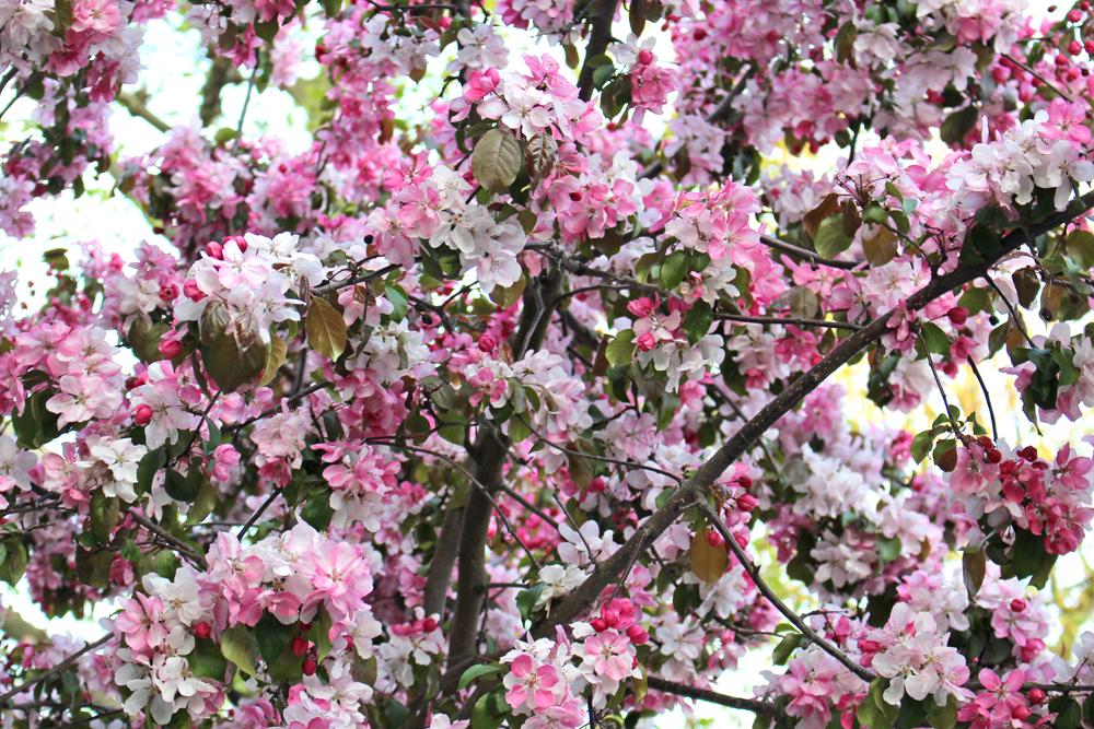 London spring trees - UK lifestyle blogger