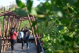 Wisata Mangrove Wonorejo Kian Cantik dengan Ornamen Baru