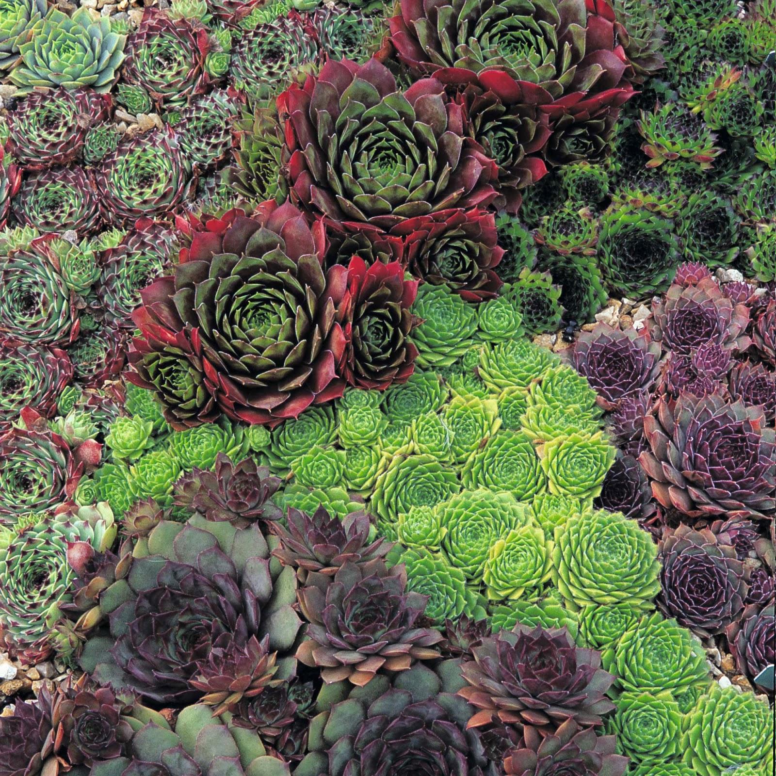 Tarım Siteniz çiçek Türleri Types Of Flowers