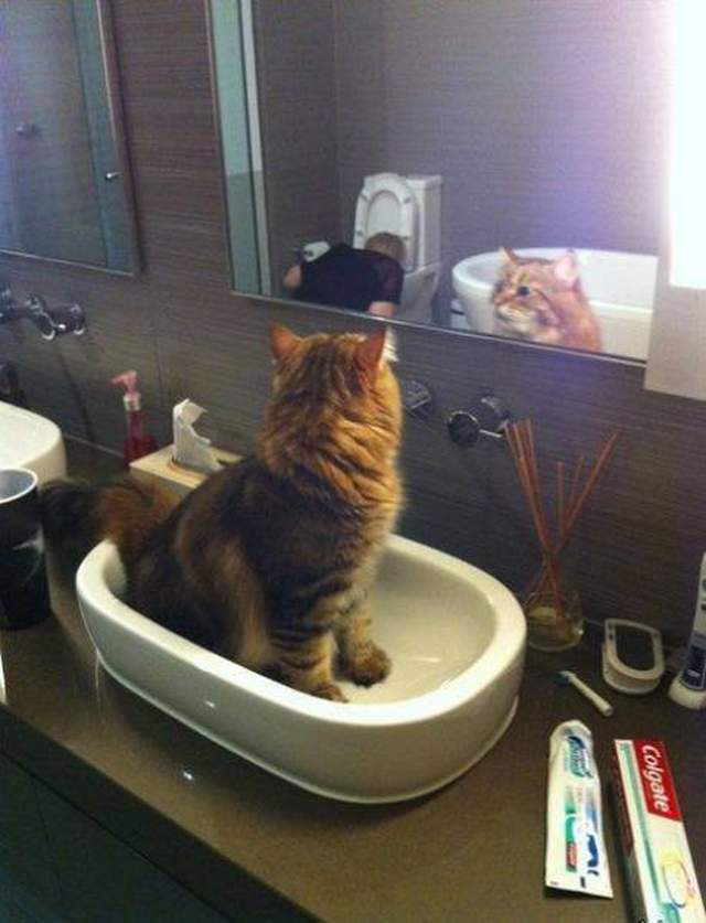 Funny cats - part 252, cute cat images, funny cat photos