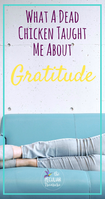 What a dead chicken taught me about gratitude.