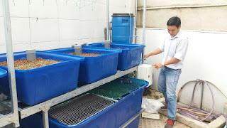 he-thong-aquaponic-6-khay-100l