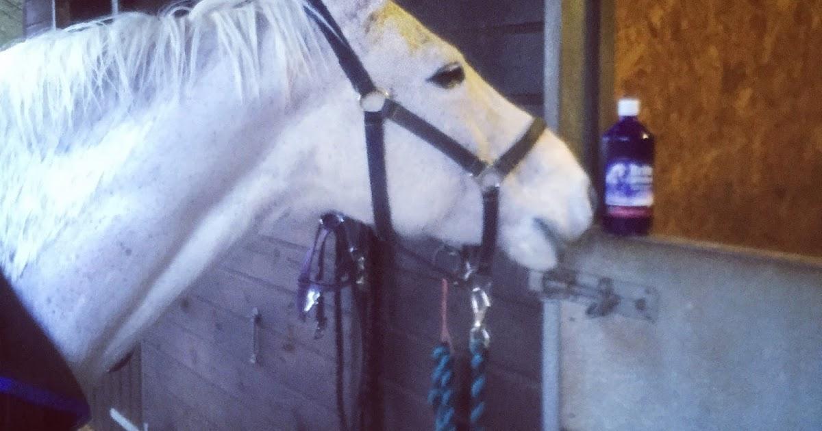 Keeping Up With The Unicorns - Horse Health Brite Whites Shampoo